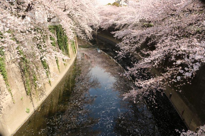 神田川-1.jpg