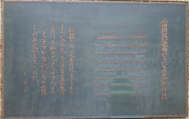 カラタチ-1.jpg