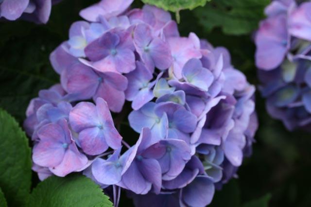 装飾花-1.jpg