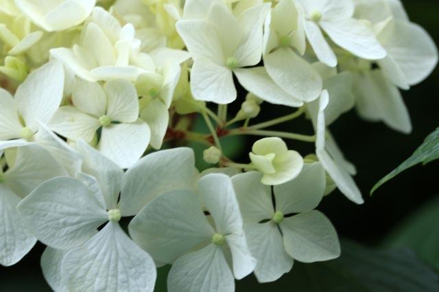装飾花-1-1.jpg