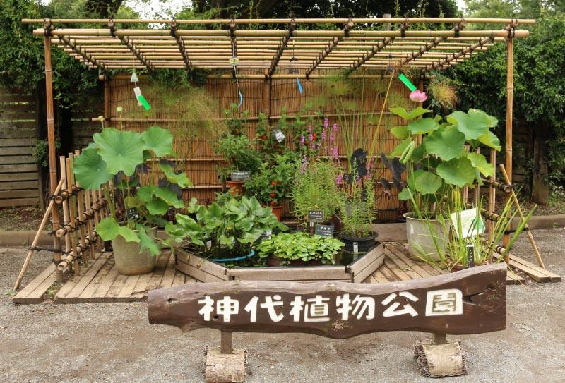 神代植物園-1.jpg