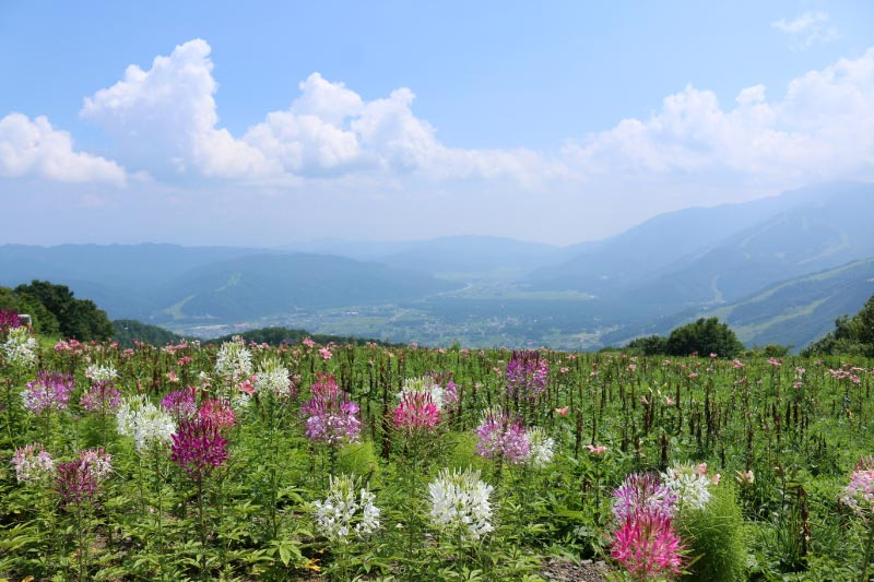 岩岳から見た空-1-1.jpg