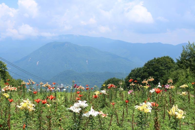 岩岳百合苑-1.jpg
