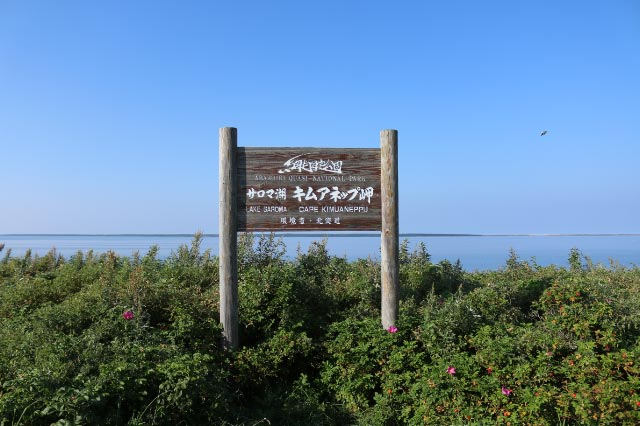 キネアップ岬-1.jpg