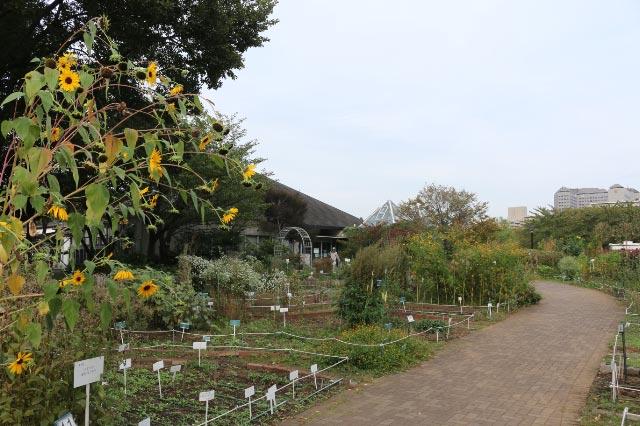 都市緑化植物園.jpg