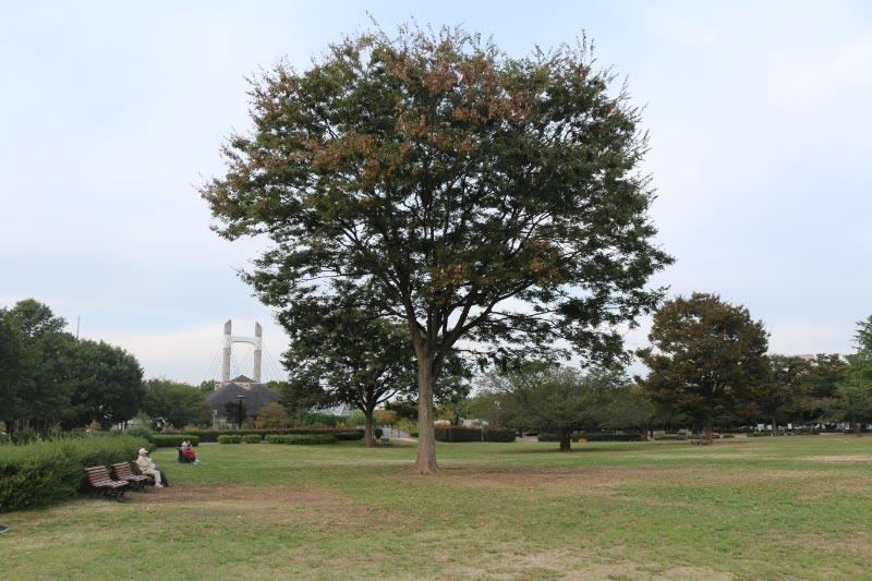 木場公園-1.jpg