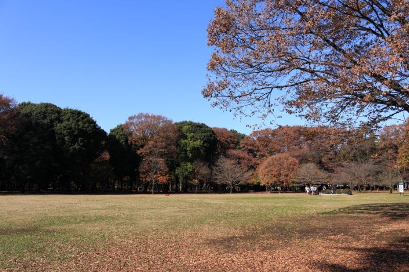 砧公園-1.jpg