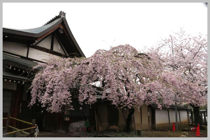 氷室神社-1-1.jpg
