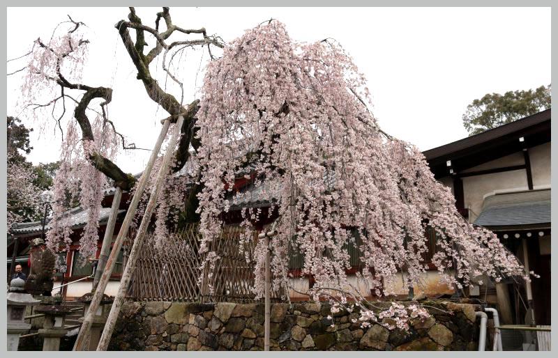 氷室神社-1-2.jpg
