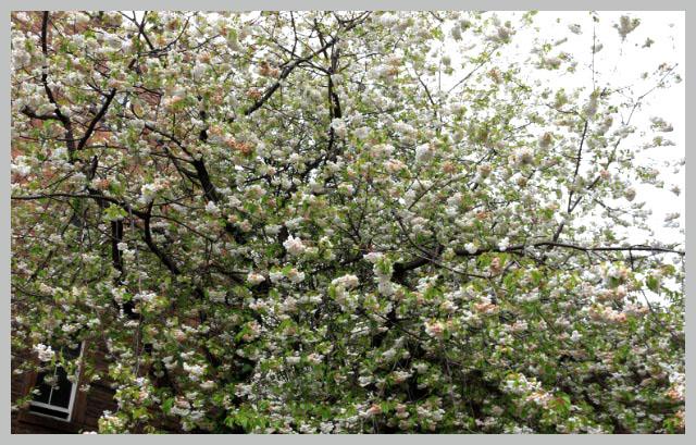 桜-1.jpg