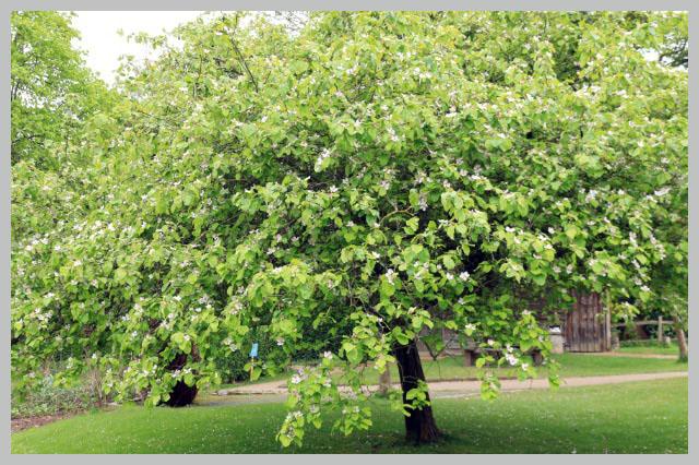 林檎-1.jpg