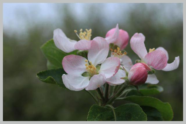 林檎-1-2.jpg