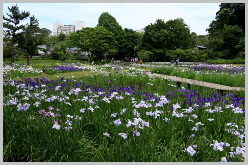 佐倉城址公園-1.jpg