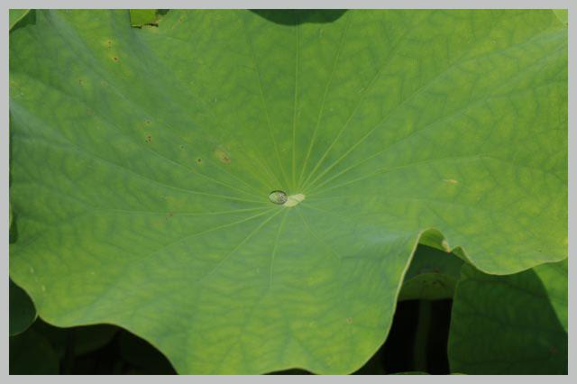 水をはじく-1.jpg