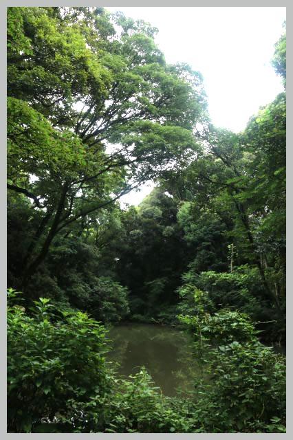 水鳥の沼-1.jpg