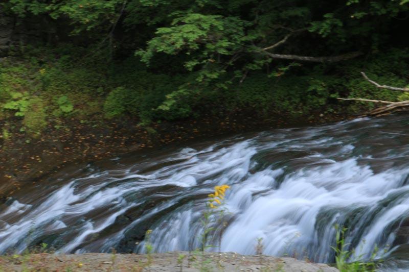 白扇の滝とセイタカアワダチソウ-1.jpg