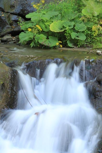 滝とアキノキリンソウ-1.jpg