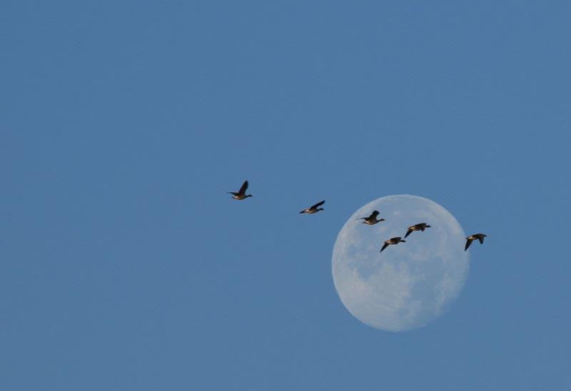 月と雁-1.jpg