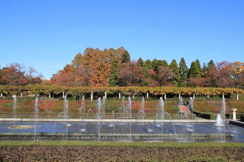 薔薇園-1.jpg