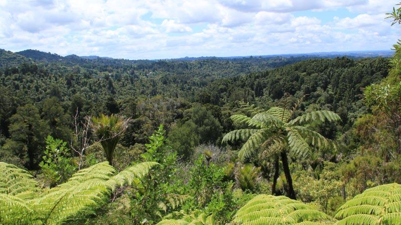 カウリ森林保護区-1-1.jpg