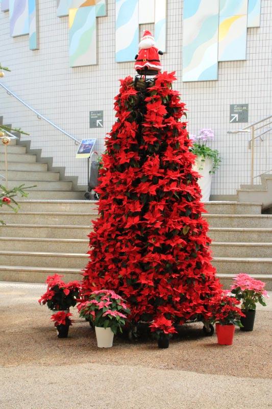 ポインセチアのクリスマスツリー-1.jpg