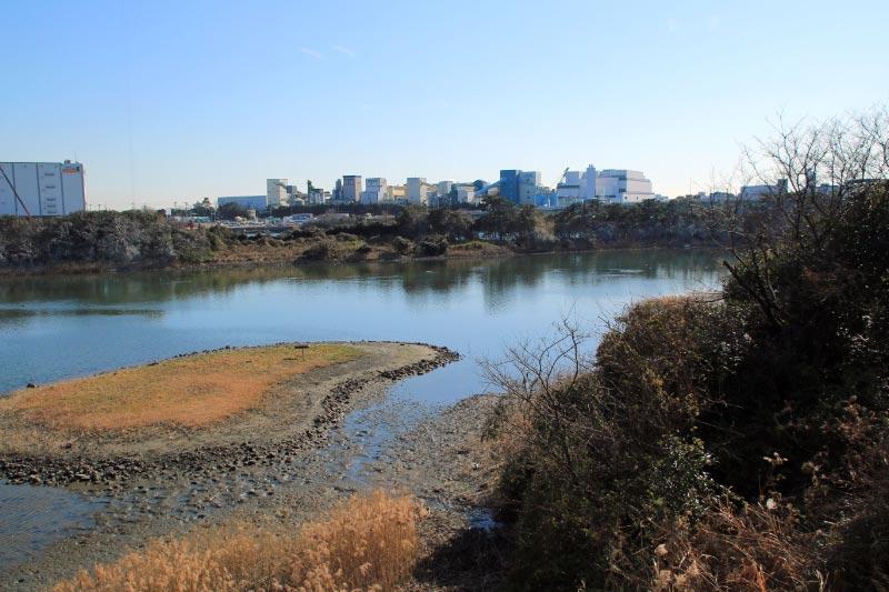 東京港野鳥公園-1.jpg