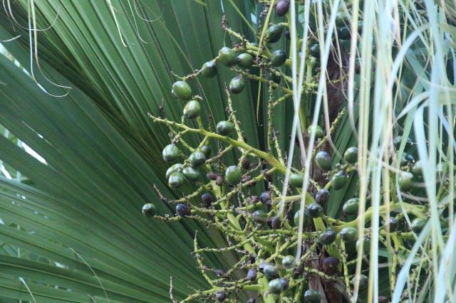棕櫚-1.jpg