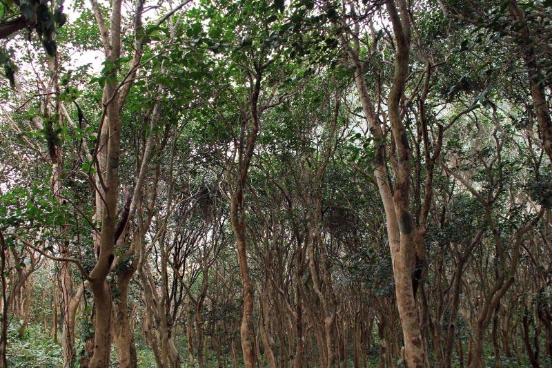 亀が浦の椿林-1.jpg