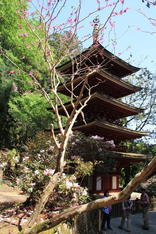 室生寺とハナズオウ-1.jpg