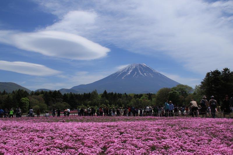 富士山、芝桜、吊るし雲-1.jpg