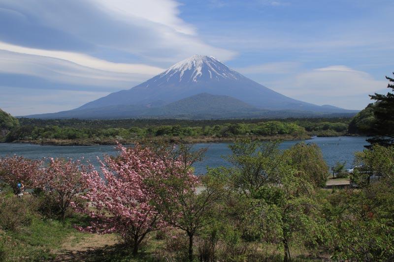 八重桜-1.jpg