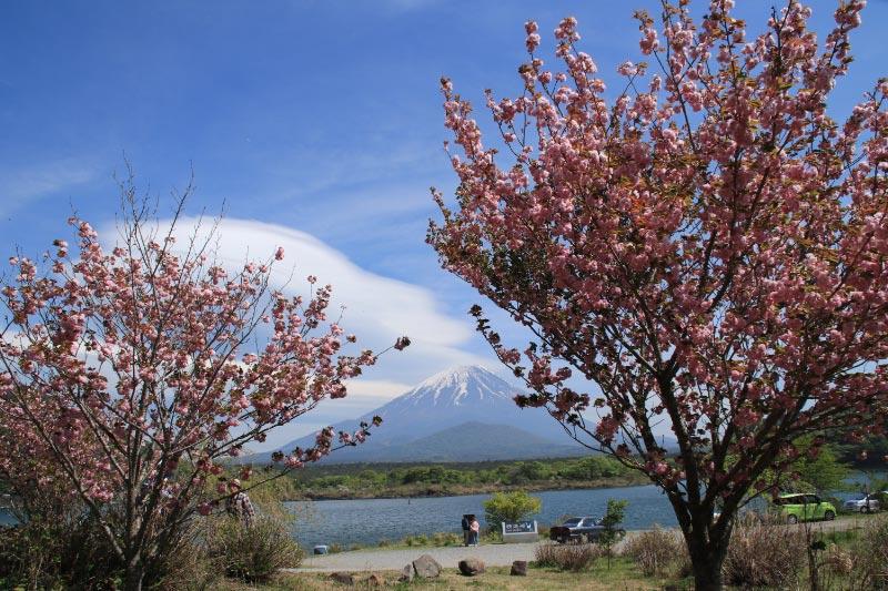八重桜-1-1.jpg