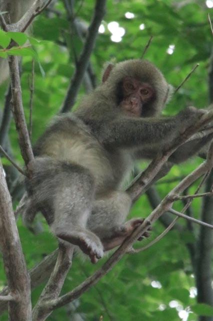 猿-1.jpg