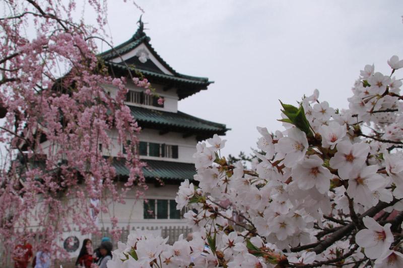 弘前城-1-3.jpg