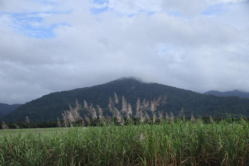 サトウキビ畑-1.jpg