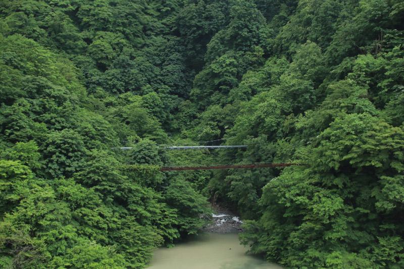 サル橋-1.jpg