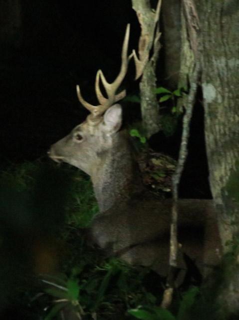 鹿-1.jpg