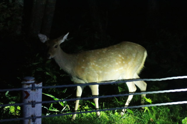 雌鹿-1.jpg