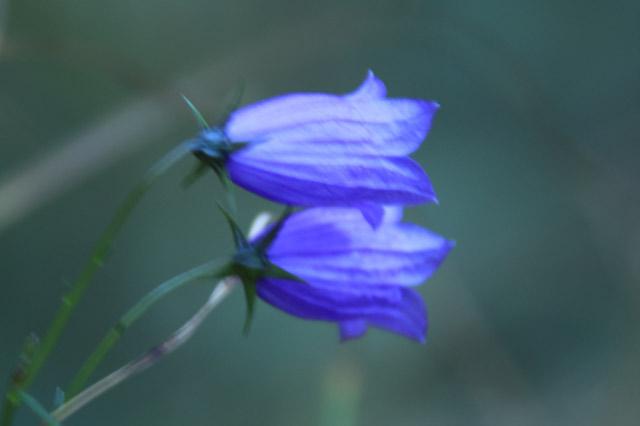 花-1.jpg