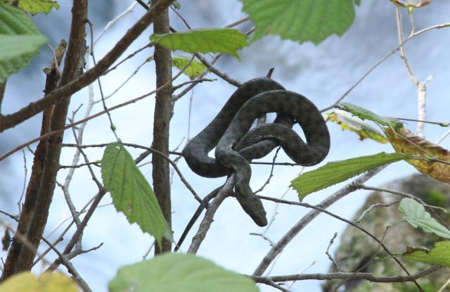 蛇-1.jpg