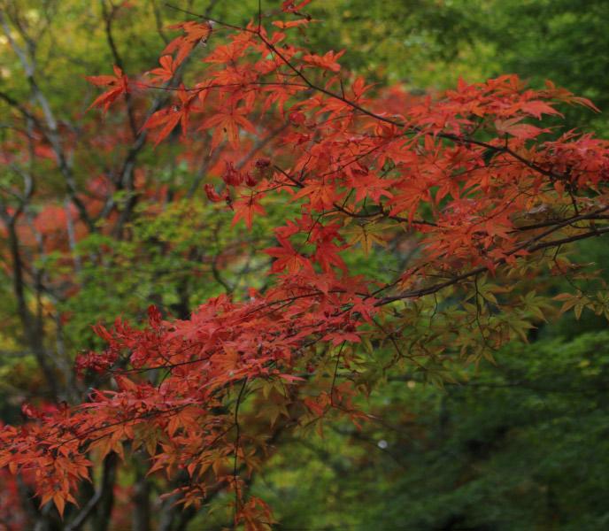 寺の紅葉-1.jpg