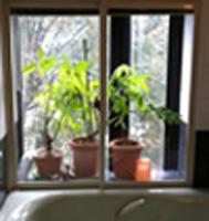 Nさん邸のバスルームの窓