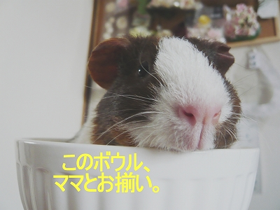 オソロイダネ〜。