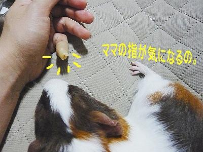 私の小指、、、。