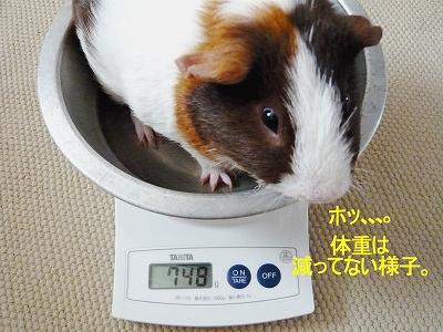 ピーピー翌日の体重測定。