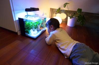 金魚を観察