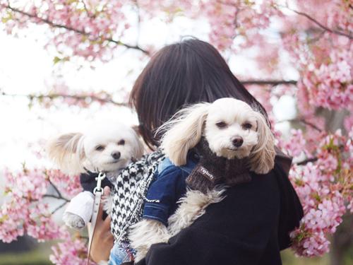20170224 中目黒_2849_blog.jpg