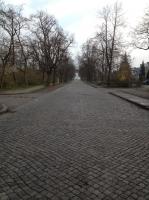 デッサウ散歩道