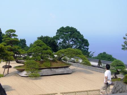 世界一の盆栽