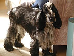 すだち氏夫妻の愛犬オスカー。常に元気いっぱいです。